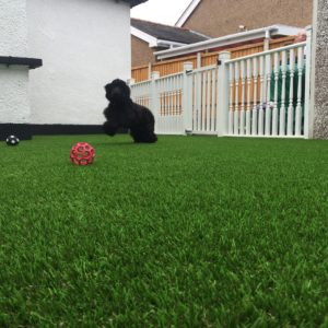 Artificial Lawn in Rhyl
